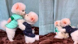 BEST ANIMAL VIDEO